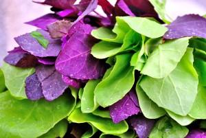 legume-sanatoase