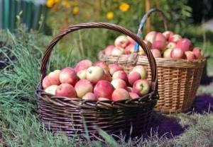 Beneficiile merelor pentru sănătate