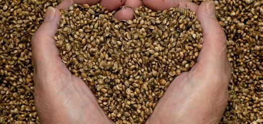 Semințe care protejează inima
